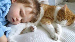 ภาพความน่ารักของ แมว กับ เด็ก