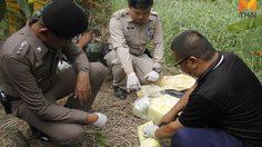 ผงะ! พบยาบ้า 70,000 เม็ด ซุกซ่อนในกอกล้วย