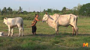 หนุ่มฉุนส่องกบไม่ได้ ไล่ตัดหางวัวชาวบ้านจนตาย