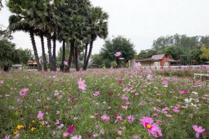 The Blooms Orchid Park จังหวัดราชบุรี
