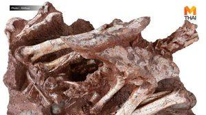 จีนพบฟอสซิล 'ไดโนเสาร์กำลังฟักไข่' สุดหายาก