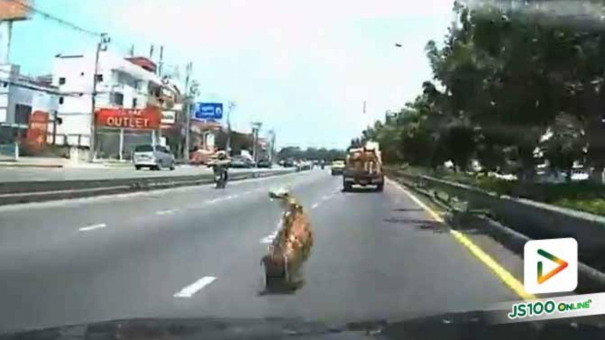 ตามหาทะเบียน!! รถปิคอัพบรรทุกกล่องลังร่วงใส่รถเจ้าของคลิปวิดีโอ ได้รับความเสียหาย (29/09/2019)