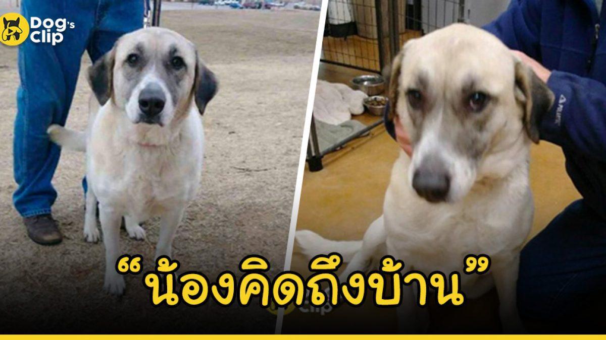 น้องหมาผู้ซื่อสัตย์ เดินกลับบ้านไกลกว่า 32 กิโลเมตร หลังโดนเจ้านายนำมาทิ้งไว้ที่ศูนย์พักพิง