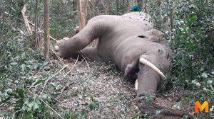 พบซากช้างป่ากุยบุรี คาดพลาดท่าตกเขา หลังเกิดการต่อสู้กัน