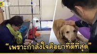โรงพยาบาลสัตว์ในจีนอนุญาตเจ้านายอยู่นอนเฝ้าน้องหมาของตัวเองได้