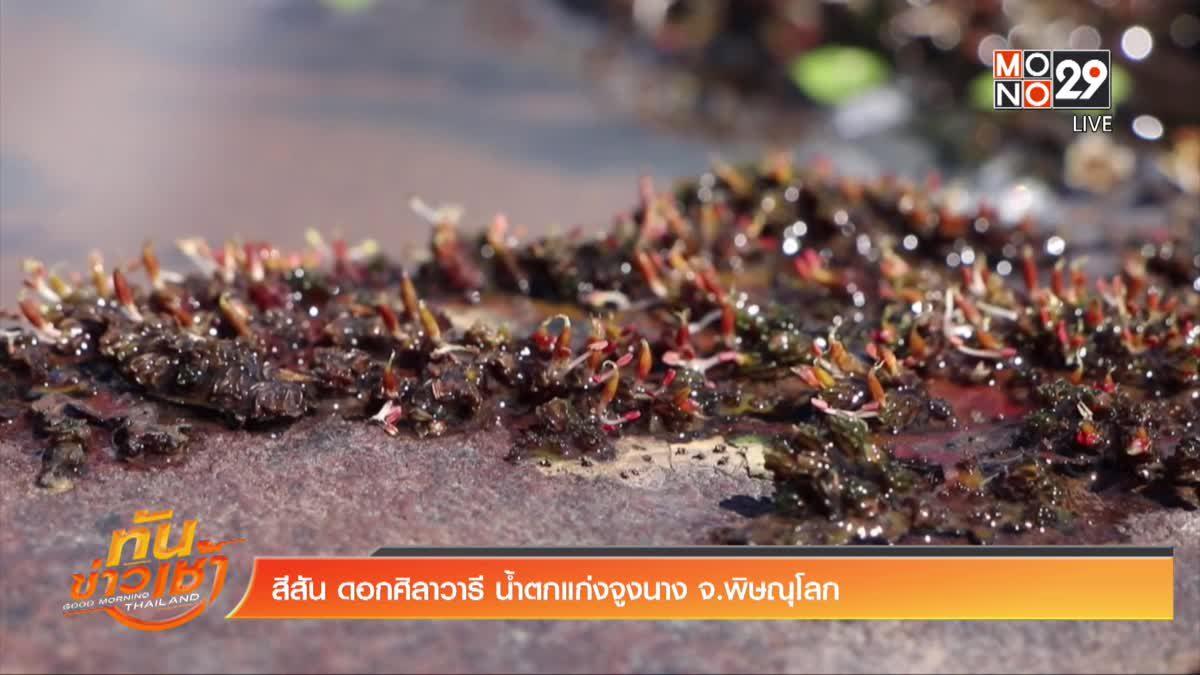 สีสัน ดอกศิลาวารี น้ำตกแก่งจูงนาง จ.พิษณุโลก