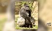 สวนสัตว์ในสหรัฐฯยิงกอริลลาช่วยชีวิตเด็ก