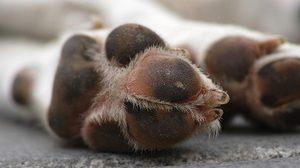 เร่งล่าคนใจโหด วางยาเบื่อแมว ตายแล้วกว่า 200 ตัว
