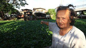 ชาวปทุมร้องกำจัดผักตบชวา ขึ้นเต็มคลอง ทำเดือดร้อนพายเรือขายของไม่ได้