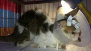 คนรักสัตว์ระวัง! มิจฉาชีพหลอกขอเงินบริจาคช่วยหมาแมวป่วย