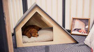 บ้านหมาขนาดเล็ก สำเร็จรูปแนวโมเดิร์น ดีไซน์จากเกาหลี เก๋ได้ไม่ต้องรอ!