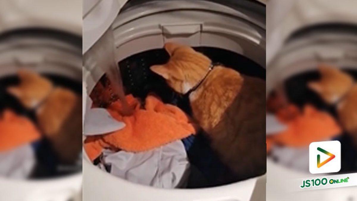 มนุษย์จะซักผ้าเหรอ เดี๋ยวขอตรวจงานก่อนปั่นแล้วกัน