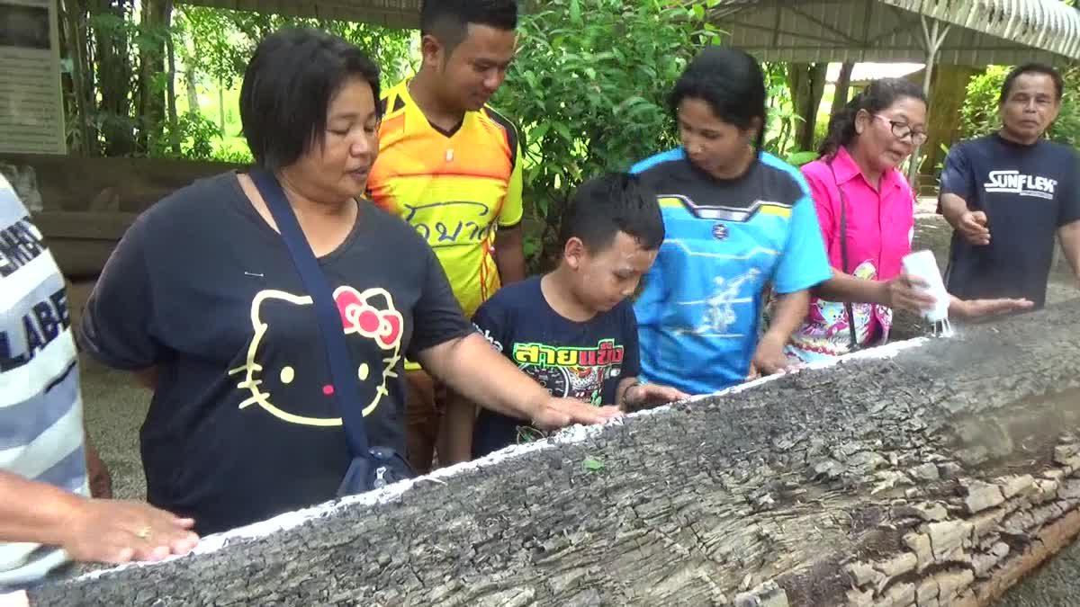ใกล้วันหวยออกพบต้นตะเคียนยักษ์อายุกว่า 400 ปี ชาวบ้านแห่ขูดเลขเด็ด
