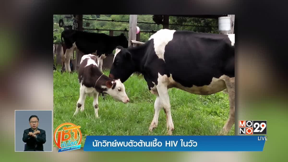 นักวิทย์พบตัวต้านเชื้อ HIV ในวัว