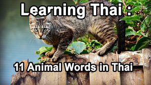 Learning Thai : 11 Animal Words in Thai