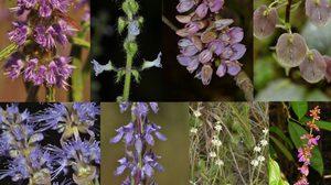 ไทยพบ 'พืชใหม่ของโลก' 8 ชนิด