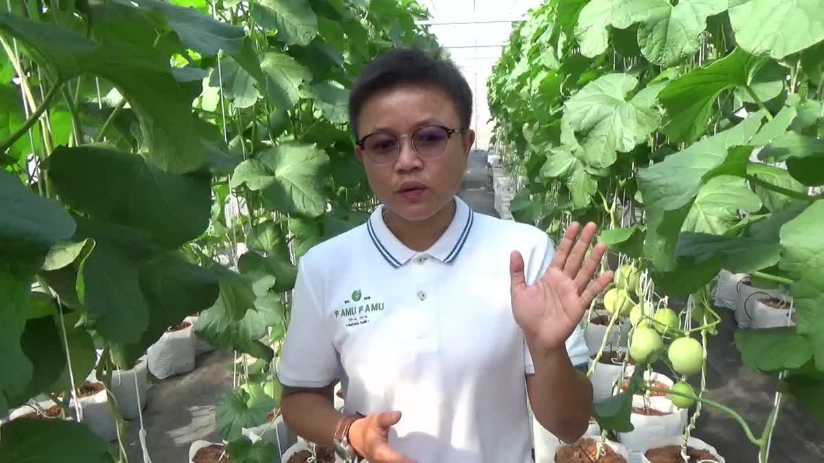 สาววิศวะยอมลาออกจากงานประจำ หันมาทำเกษตรผสมสร้างรายได้ดี