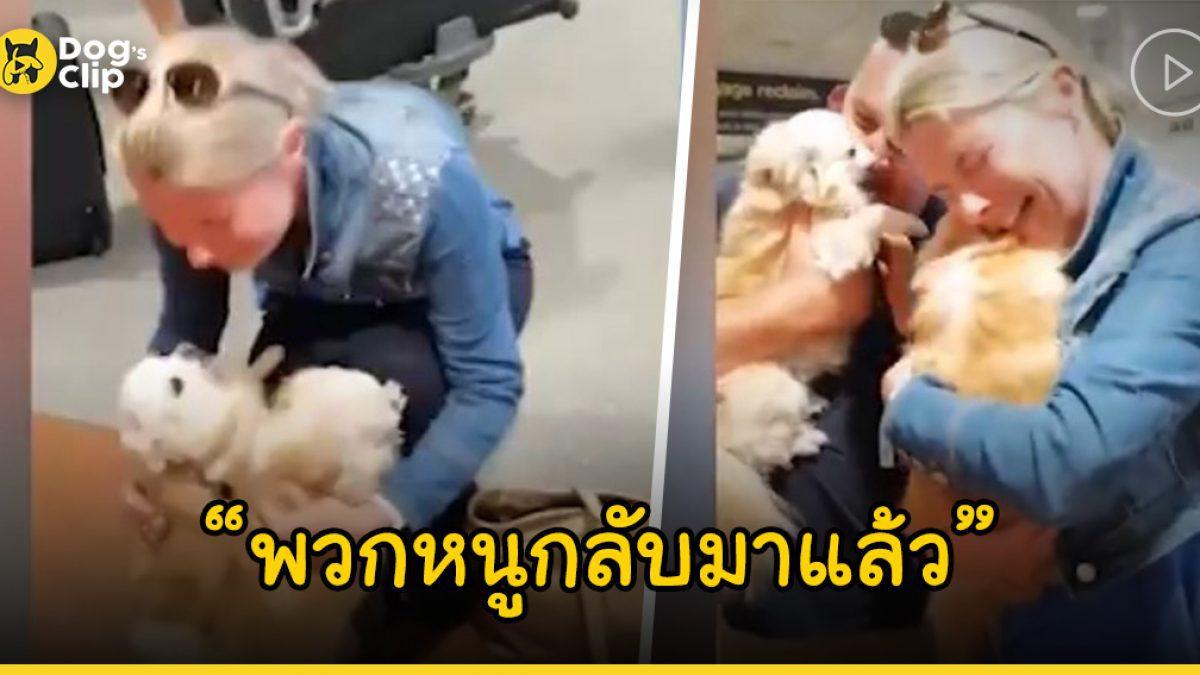 น้องหมาชิวาวาถูกขโมย เจ้านายยอมแลกเงินหลักแสนเพื่อขอคืนครอบครัวที่รัก