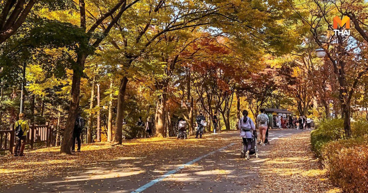 ใบไม้เปลี่ยนสี ที่ Seoul Grand Park