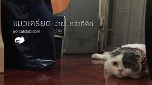 ความเครียดของ แมว ที่หลายคนอาจจะยังไม่เคยรู้มาก่อน