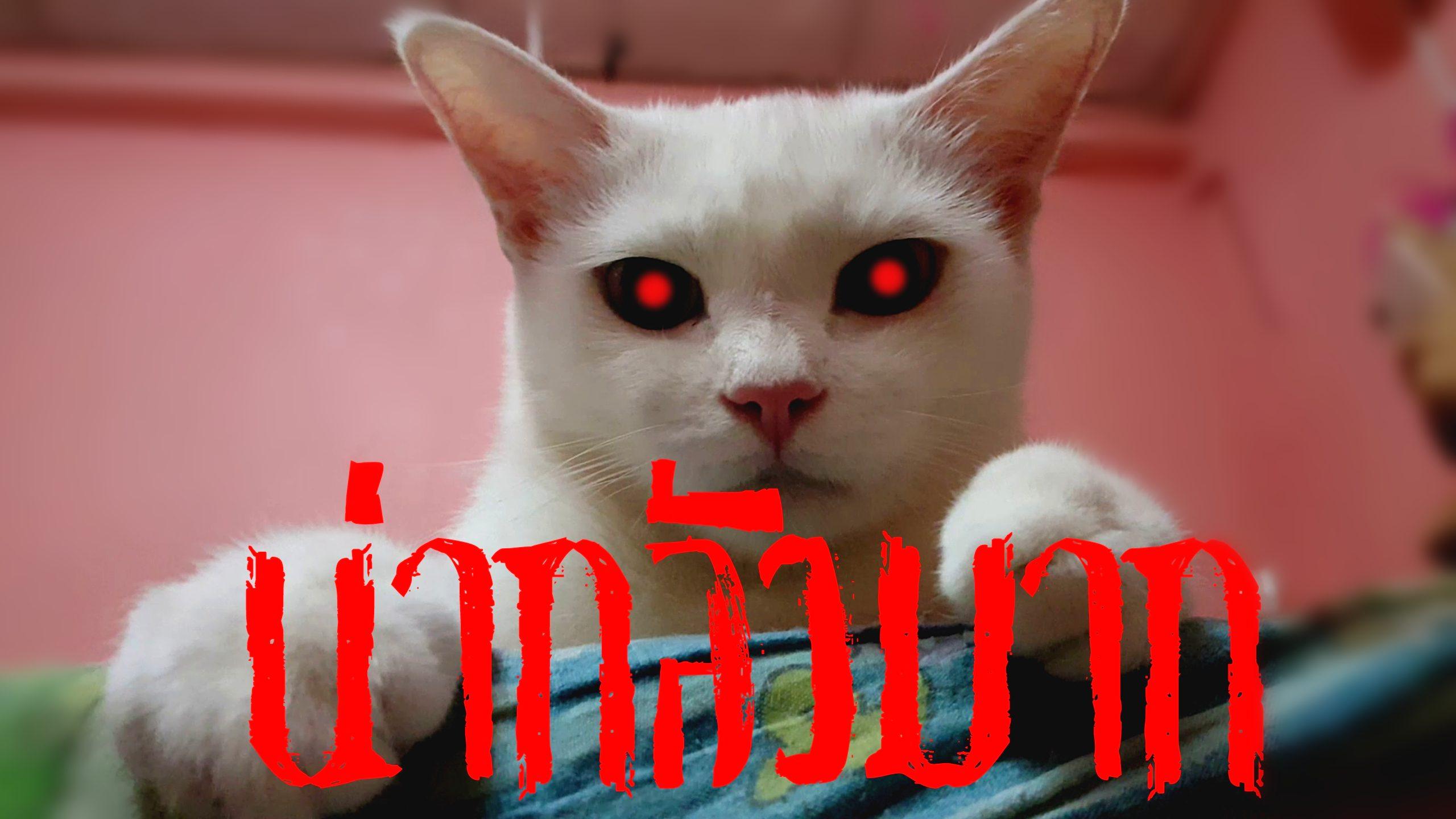 แมวปีศาจ นิ่ง เงียบ น่ากลัวที่สุด แมวพันธุ์ไทยขาวมณี