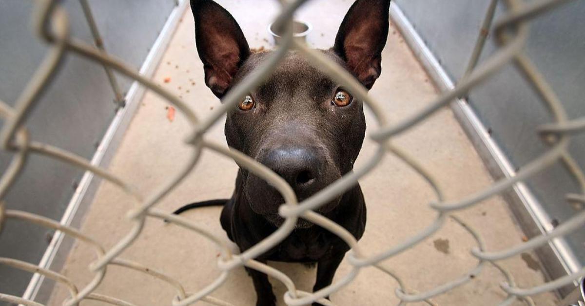 """สภาล่างสหรัฐฯ ผ่านร่างกฎหมายป้องกันทารุณสัตว์ ยกเป็น """"คดีอาญา"""" เสี่ยงคุก 7 ปี"""