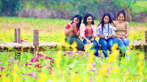 ชมดอกคอสมอสและปอเทือง ณ ทุ่งดอกไม้ Gap Organic วังน้ำเขียว
