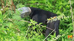 ชาวบ้านช่วยน้องหมาจรจัด หัวติดขวดโหลนานหลายวัน จนร่างกายผอมโซ