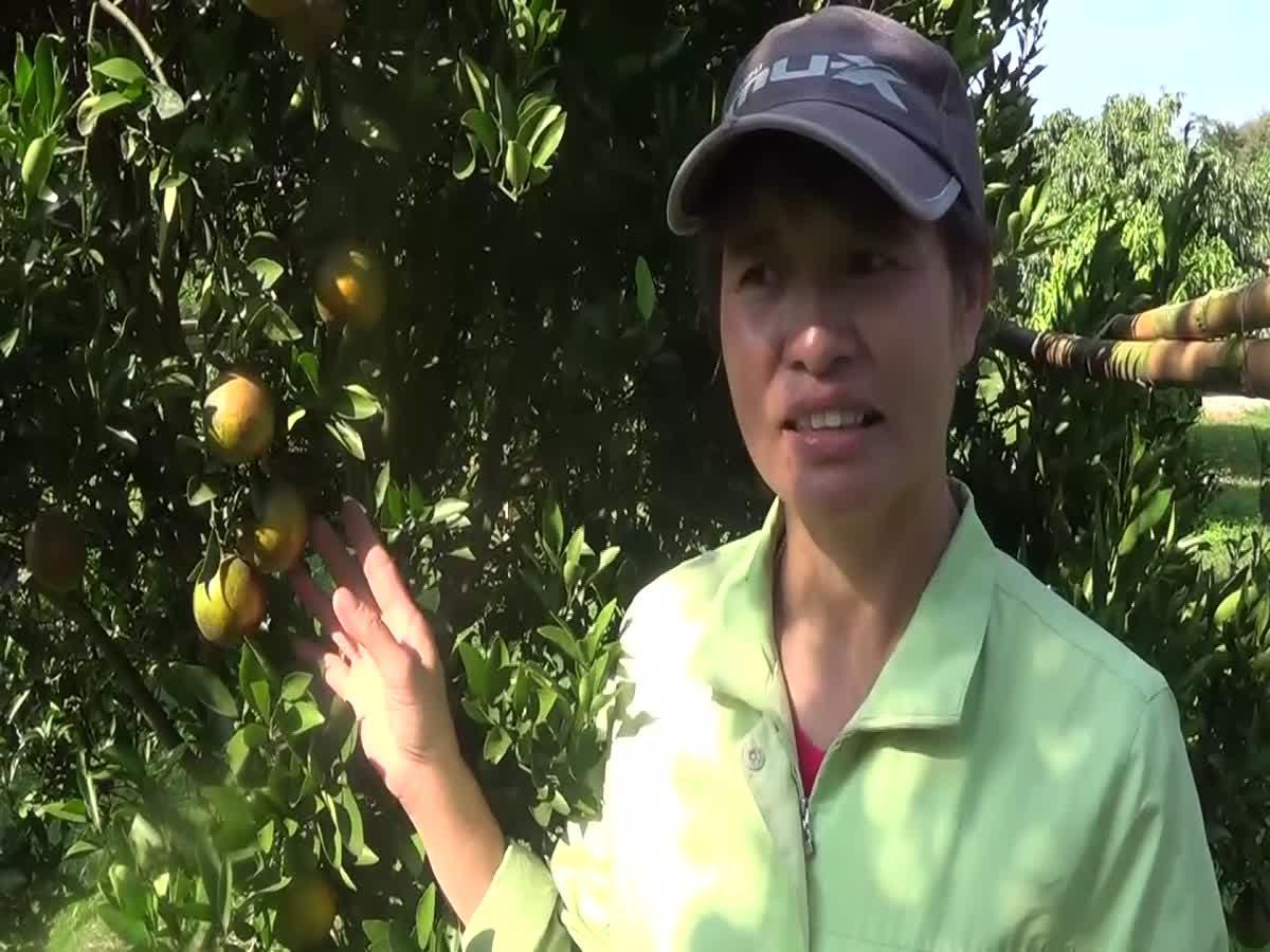 เกษตรกร! ปลูกออร์แกนิคขาย รายได้ต่อเดือนกว่า 5-6 หมื่นบาท