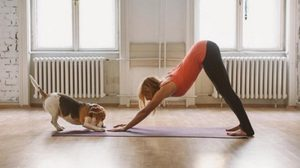 20 Animals Prove That They Can Do Really Good Yoga