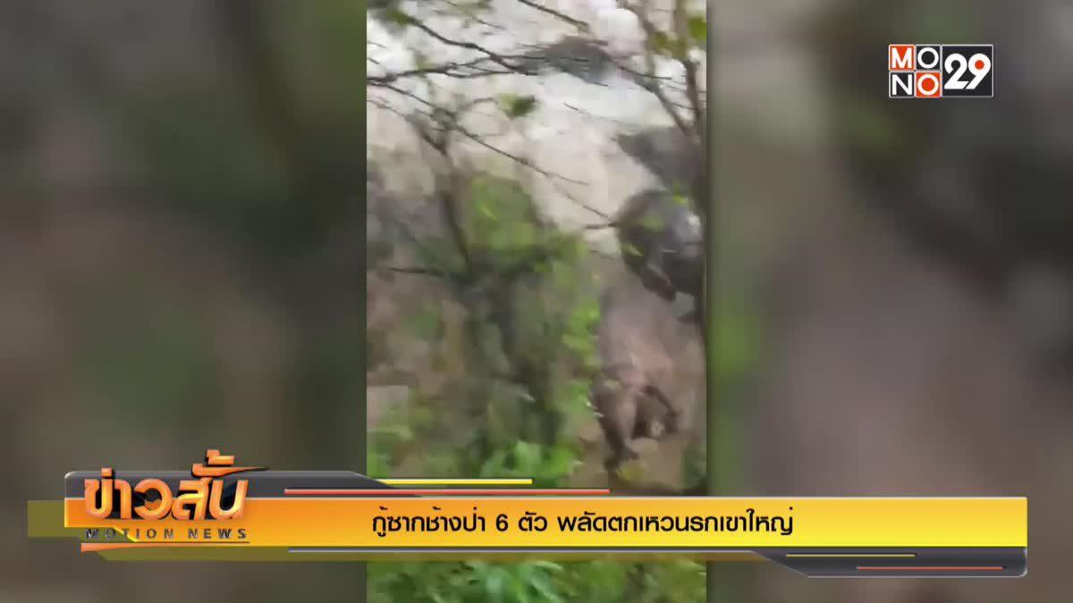 กู้ซากช้างป่า 6 ตัว พลัดตกเหวนรกเขาใหญ่