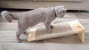 D.I.Y. ที่ลับเล็บแมว ทำง่ายๆ ไว้ให้น้องแมวสุดที่รัก