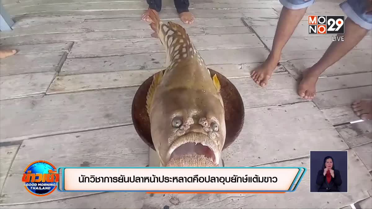 นักวิชาการยันปลาหน้าประหลาดคือปลาอุบยักษ์แต้มขาว