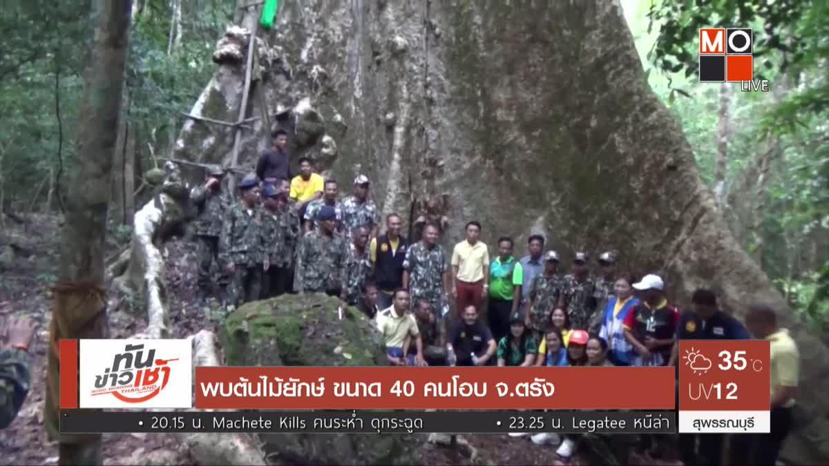 พบต้นไม้ยักษ์ ขนาด 40 คนโอบ จ.ตรัง