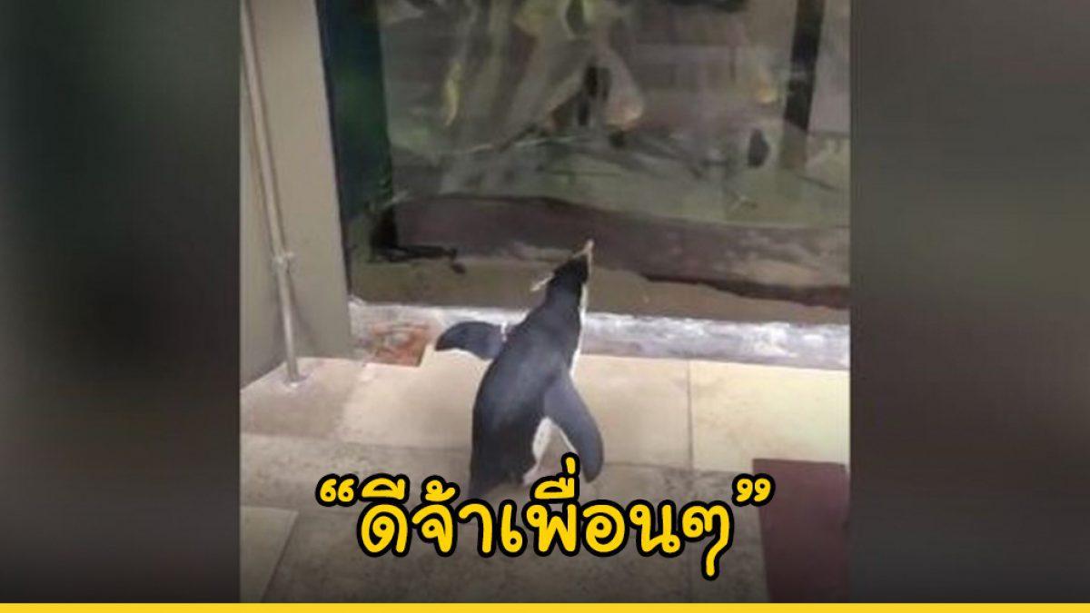 เพนกวินเดินชิล ชมเพื่อนสัตว์ชนิดอื่นๆ หลังพิพิธภัณฑ์สัตว์น้ำปิดชั่วคราวเพื่อป้องกันการแพร่ระบาดของ COVID-19