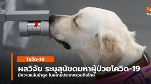 ผลการวิจัยทั้งไทย-เทศ ระบุ สุนัขสามารถดมกลิ่นหาโควิด-19 ได้แม่นยำ