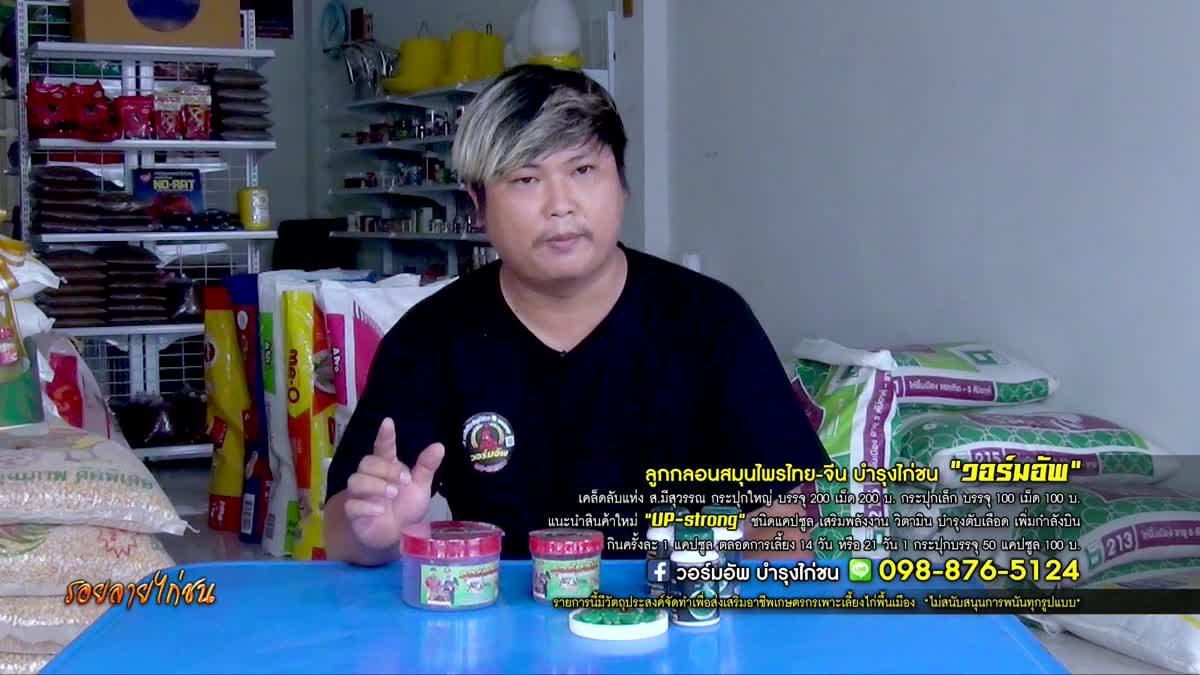 วอร์มอัพ ลูกกลอนสมุนไพรไทย-จีน บำรุงไก่ชน เคล็ดลับแห่ง ส.มีสุวรรณ
