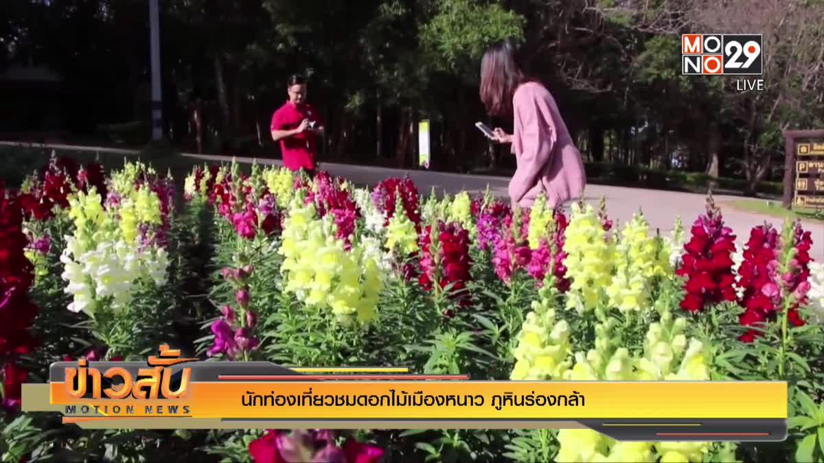 นักท่องเที่ยวชมดอกไม้เมืองหนาว ภูหินร่องกล้า