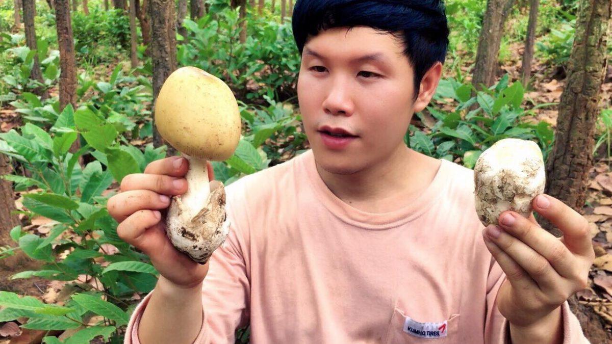 ใช้ชีวิตในป่ากับสราวุฒิ : หาเห็ดระโงก เห็ดเผาะ จ.พะเยา (Find wild mushrooms/如何找到野生蘑菇)