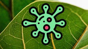 ความรู้เกี่ยวกับ ครีมสเต็มเซลล์พืช