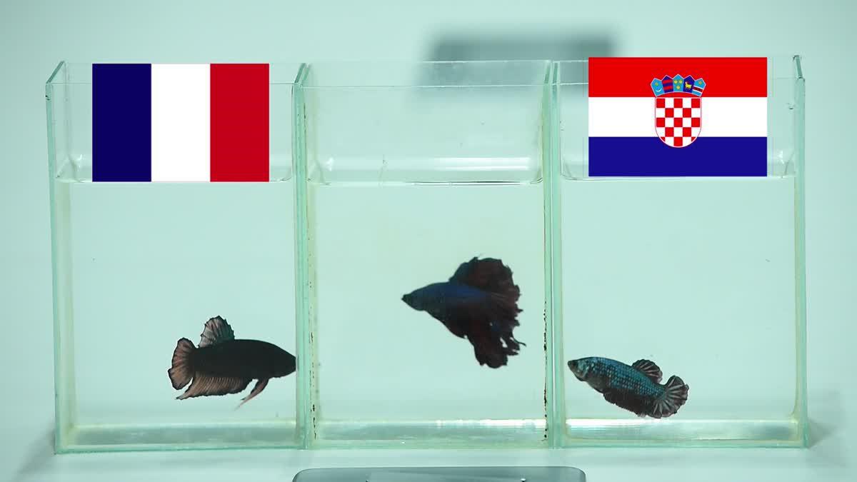 ซี้ซั้วฯ ฟันธง บอลโลก 2018 นัดชิงฯ ฝรั่งเศส พบ โครเอเชีย