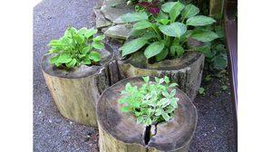 เหลือแต่ตอก็มีประโยชน์! ไอเดีย ปลูกต้นไม้ ในตอไม้เพื่อตกแต่งบ้าน