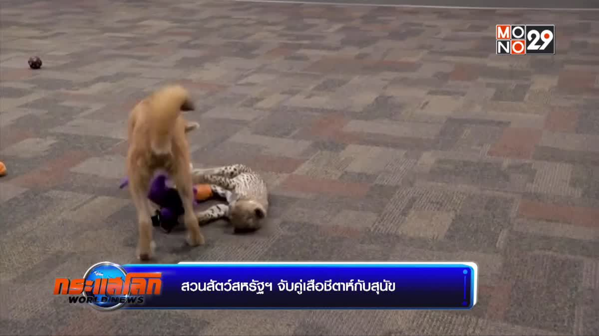 สวนสัตว์สหรัฐฯ จับคู่เสือชีตาห์กับสุนัข