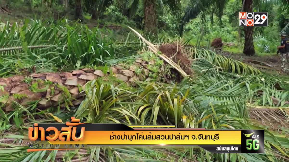 ช้างป่าบุกโค่นล้มสวนปาล์มฯ จ.จันทบุรี