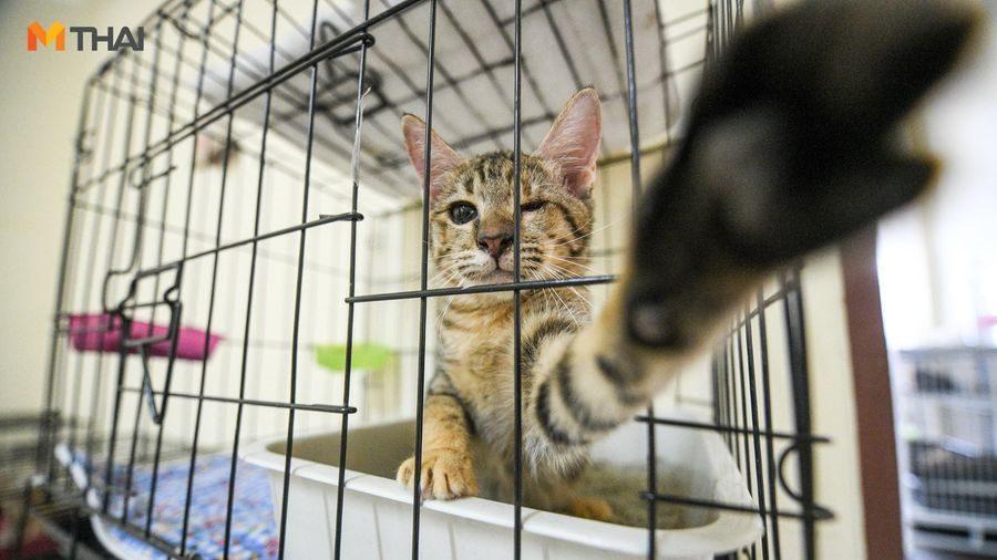 Caster สนาม ตัวกลางหาบ้านหลังใหม่ผู้พร้อมรับแมวจร