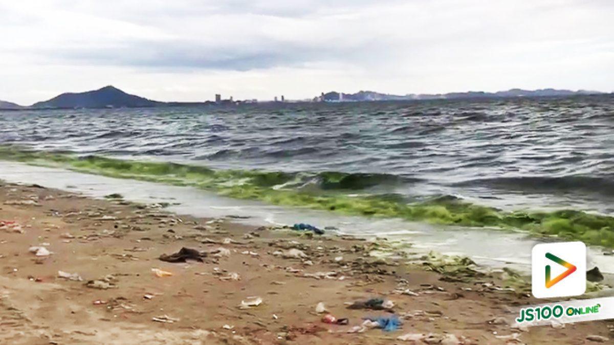 ปรากฏการณ์ 'แพลงก์ตอนบลูม' ชายหาดบางแสน น้ำทะเลกลายเป็นสีเขียว (24/08/2019)