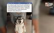 เจ้าของสุนัขไซบีเรียนแจ้งความสุนัขถูกฆ่า