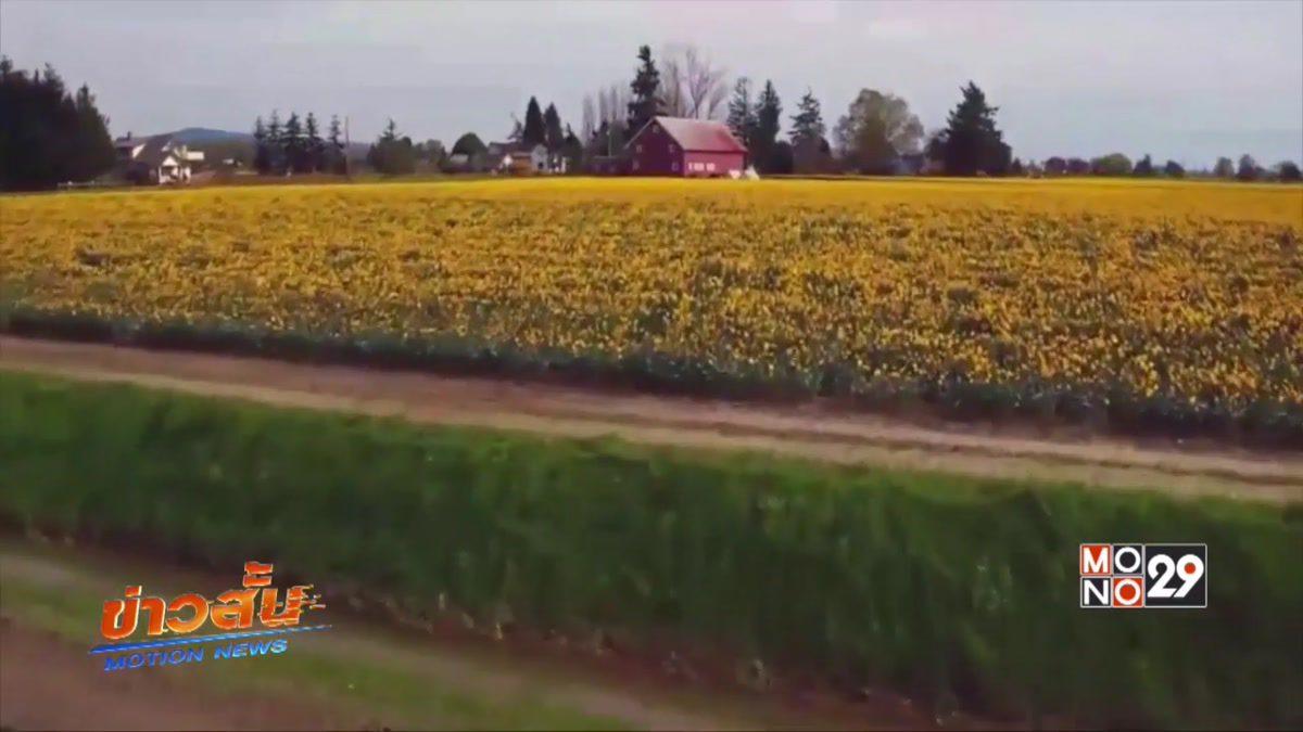 เทศกาลดอกไม้ในรัฐวอชิงตันของสหรัฐฯ