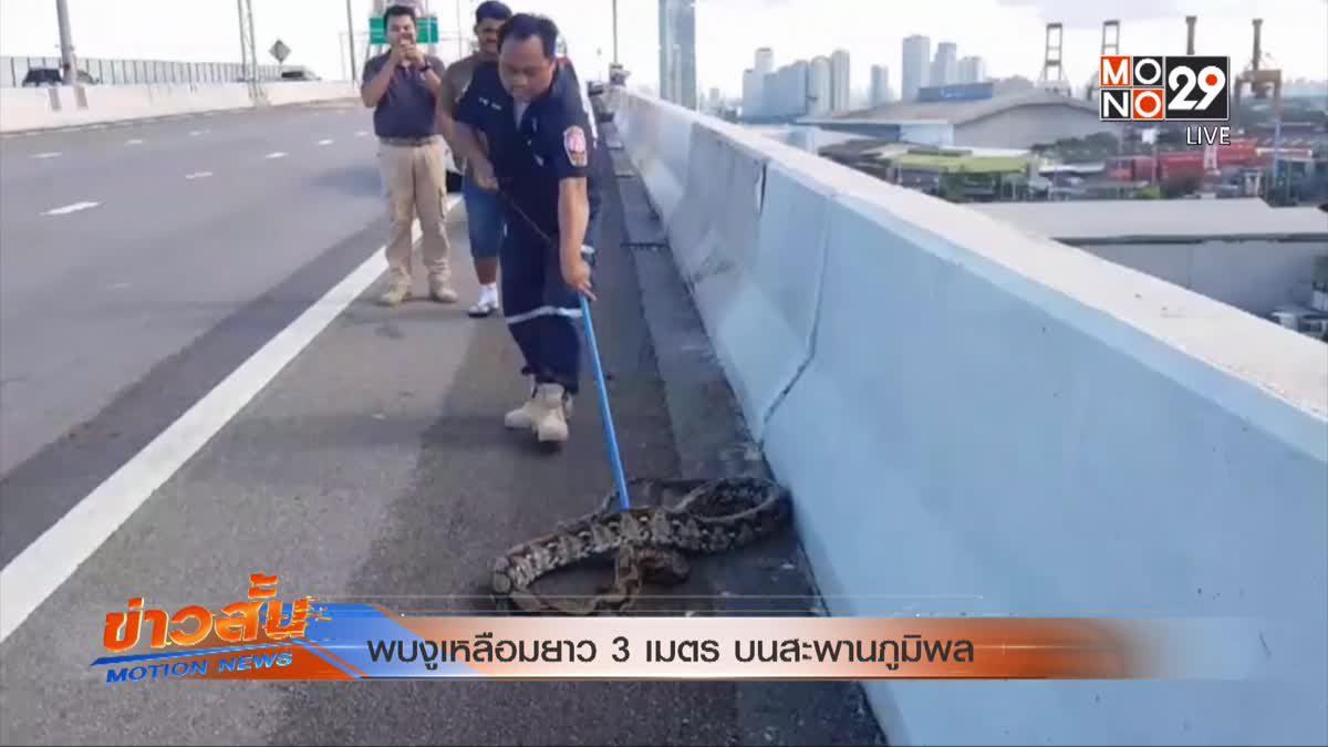 พบงูเหลือมยาว 3 เมตร บนสะพานภูมิพล
