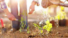 10 วิธีใช้น้ำในสวนอย่างชาญฉลาดช่วยชาติ ประหยัดน้ำ